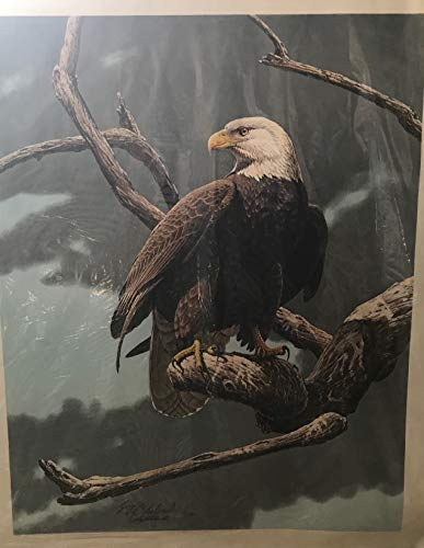 (Guy Coheleach Bald Eagle Endangered Species )
