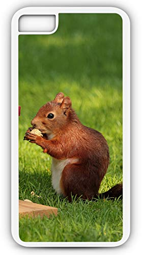 iPhone 7 Plus 7+ Case Squirrel Scluridae Marmots Chipmunk Tree Customizable by TYD Designs in White Plastic Black Rubber Tough Case