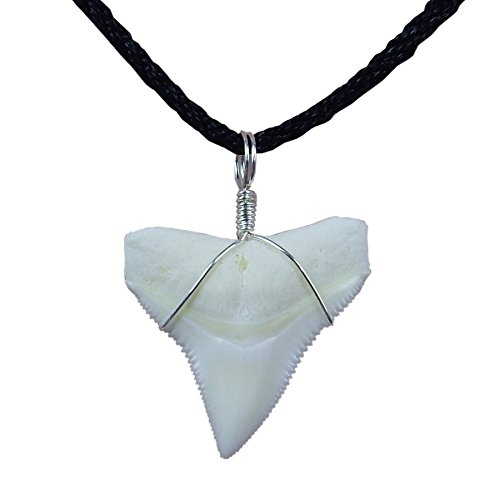 GemShark Real Bull Shark Tooth Necklace Sterling Silver Charm Pendant for Boys Girls Unisex (1.0 inch Bull Silver)