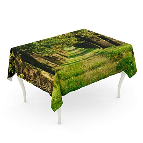 Tarolo Rectangle Tablecloth 60 x 84 Inch Allee Avenue of Old Oak Trees by The Sun in Early Autumn Grassy Road Fall Footpath Grass Lane Table Cloth