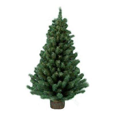 Kurt Adler 12 Miniature Pine Tree (Christmas Target Fake Tree White)