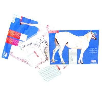 horse acupuncture chart - 2