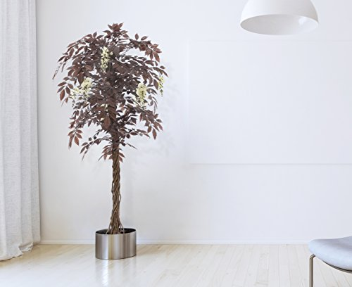 Wisteria Flowering Tree - 1