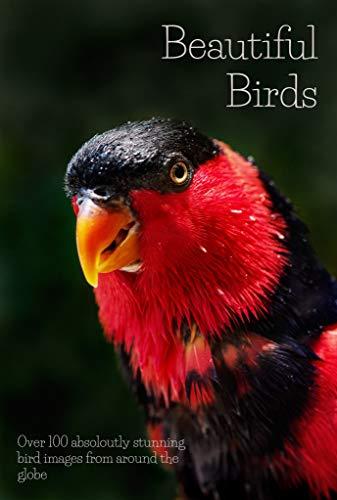 Amazon Com Beautiful Birds Over 100 Absolutely Stunning Bird