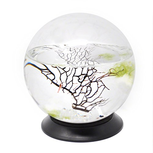 (EcoSphere Closed Aquatic Ecosystem, Medium Sphere, with Revolving Base)