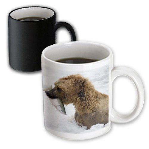 3dRose mug_45693_3 Brown Grizzly Bear with Salmon in White Water Close-Up Katmai National Park, Alaska Magic Transforming Mug, 11 oz, - Pic Bear Grizzly