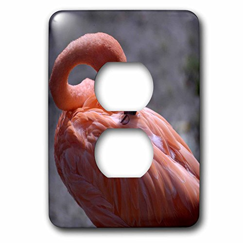 - 3dRose lsp_91532_6 Omaha, Henry Dourly Zoo. Flamingo, Tropical Bird-Us26 Gha0034-Gayle Harper 2 Plug Outlet Cover Multicolored