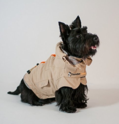 ThunderCoat 2 in 1 Combo Pack! Includes ThunderShirt (Medium) by Thundershirt (Image #1)
