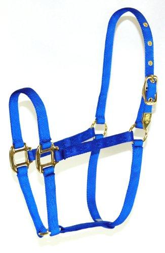 - Hamilton 8D AVBL 3/4-Inch Nylon Arabian Horse Halter for 800 to 1100-Pound Horse, Blue