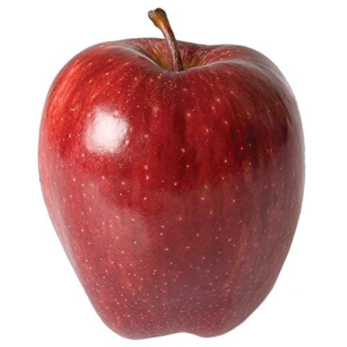 Red Delicious Apple Tree Semi-Dwarf - Healthy - Established - One Gallon Pot - 1 Each by Growers Solution