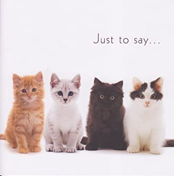 Mixed Kittens Birthday Card Just To Say Amazon Kitchen