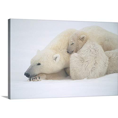 (Mother Polar Bear & Cub Huddle in Snow Storm Canvas Wall Art Print, 18
