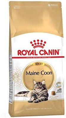 ROYAL CANIN Comida seca para gatos Maine Coon 31 para adultos, equilibrada y completa, 2 kg