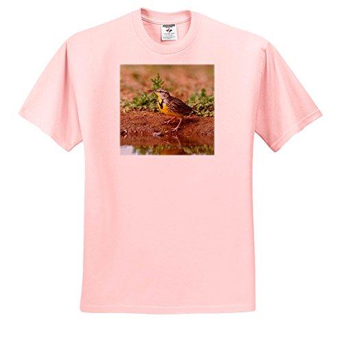 3dRose Danita Delimont - Songbirds - Eastern Meadowlark, Sturnella Magna, Drinking - T-Shirts - Light Pink Infant Lap-Shoulder Tee (24M) (TS_279464_73) - Meadowlark Three Light