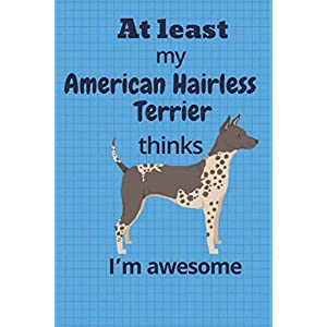 At least My American Hairless Terrier thinks I'm awesome: For American Hairless Terrier Dog Fans 13