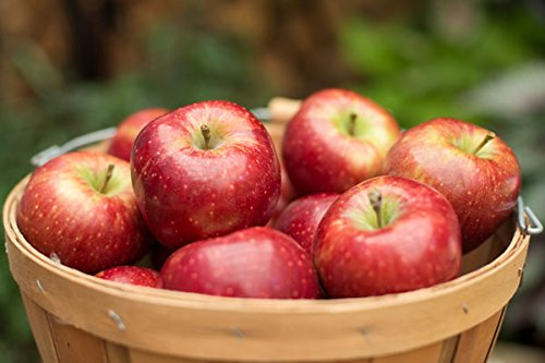 (Orchard Fresh Red Delicious Apple Box (18-22 Apples))