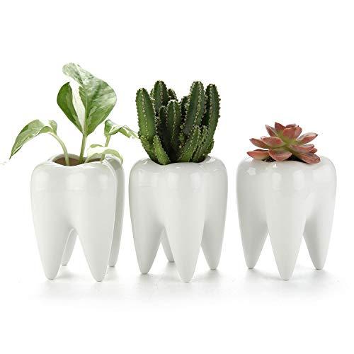 T4U Tooth Succulent Pots 3-Pack, Cute White Ceramic Planter Cactus Plant Pot, Creative Pen Pencil Holder for Home Office Desk Decor, Best Birthday Wedding Christmas Gift for Dentist Dental Student
