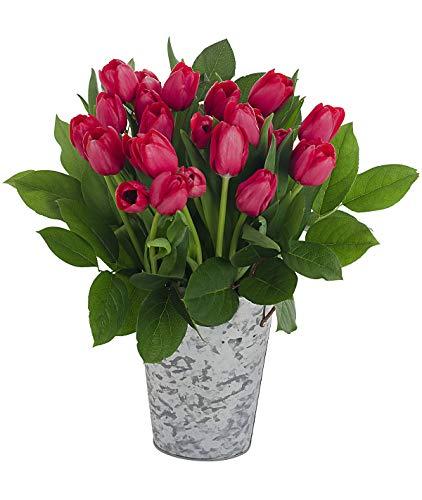 Stargazer Barn Passion Bouquet 2 Dozen Red Tulips with French Bucket Style Vase