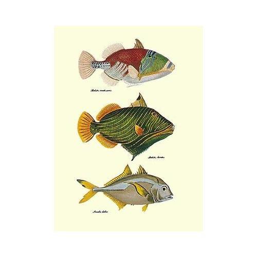 Antique Tropical Fish - 1