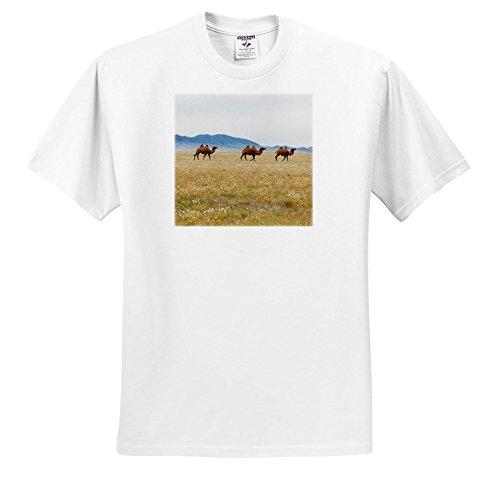 Gobi Desert Camel - 9