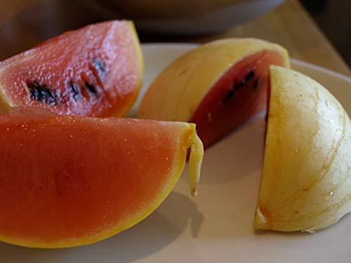 40 Seeds | Golden Midget Watermelon | Very Early | Taste is Sweet & Refreshing by AchmadAnam