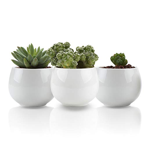 - UFIG Pack of 3 Tiny White Ceramic Succulents Plants Pots Cactus Standing Planters Containers, 2.4 Inch