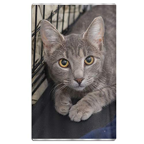 Phyllis Walker Cowardly Cat Beach Towel Soft Quick Dry Lightweight High Absorbent Pool Spa Towel for Men Women 31 X 51 Inch]()