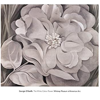 The White Calico Flower 1931 Georgia O/'Keeffe Flower Floral Print Poster 34x30