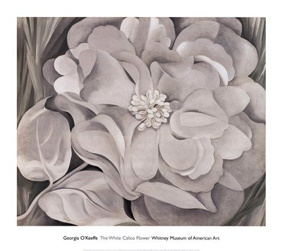 The White Calico Flower, c.1931 Art Print Art Poster Print by Georgia O'Keeffe, 34x30