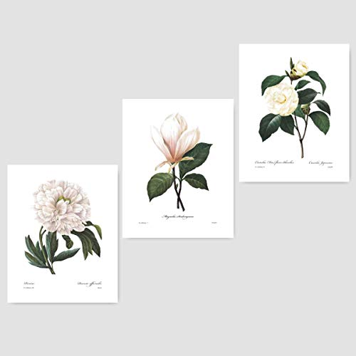 (Set of 3) Botanical Prints (White Home Decor Room, Redoute Flower Wall Art) Camellia, Peony, Magnolia - 8x10 Unframed