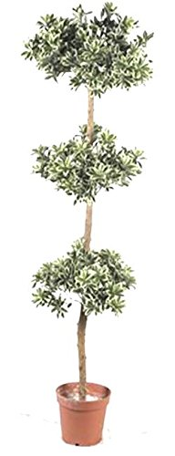 Tierra Garden 52-93033 Artificial Persian Topiary Tree, 5-Feet