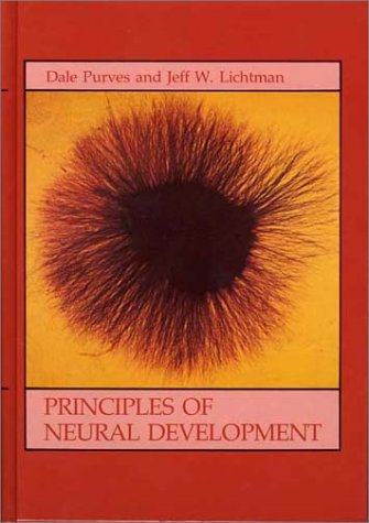 Principles of Neural Development