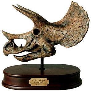 Model, Triceratops Skull