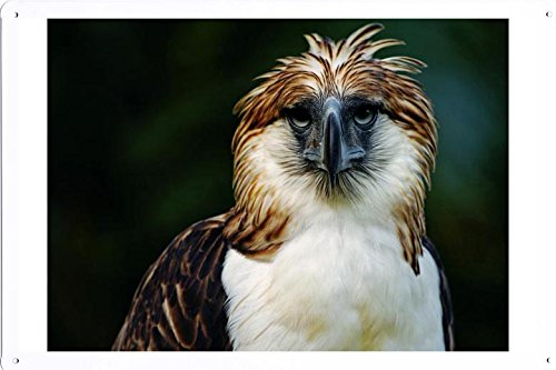 Tin Poster (20x30cm) of Philippine Eagle 7764 by Global Animal Sign (Philippine Eagle)