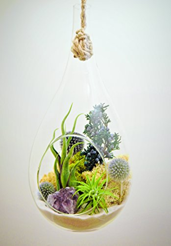 Bliss Gardens Teardrop Air Plant Terrarium with Purple Amethyst, Juniper, Moss, Extra Large 13