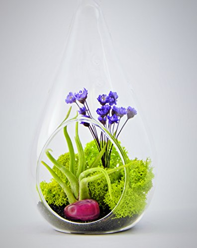 Bliss Gardens Air Plant Terrarium With 7'' Teardrop Glass / Enchanted Forest by Bliss Gardens
