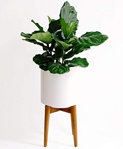 (Large Mid Century Modern Glossy White Planter Pot with Wooden Stand. Perfect for House Plants, Modern Home and Office Decor, Poly Resin Planter Pot Included - Finch Supply Co.)