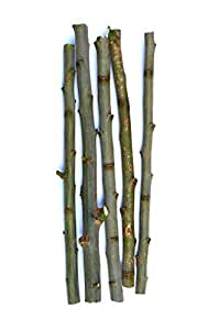 TreesAgain Lot of 5 Pussy Willow cuttings - Salix discolor - 7 to 9 inches