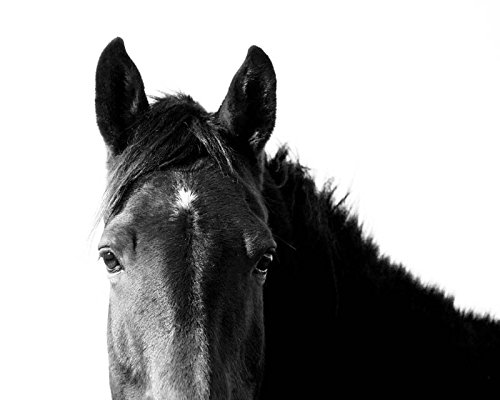 Black and White Horse Photography Fine Art Animal Nursery Large Wall Art by Erin Johnson Photography