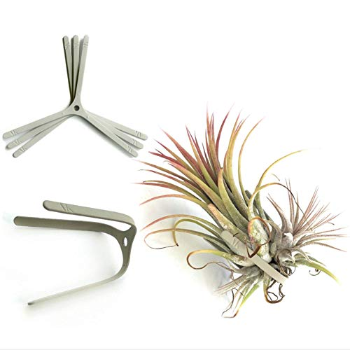 Air Plant Holder for Vertical Garden 3 Pack Air Plants House Plants make Great Wall Decorations for Living Room Wall Planters for Hanging Plant and Tillandsia Air Plants Living Wall ()