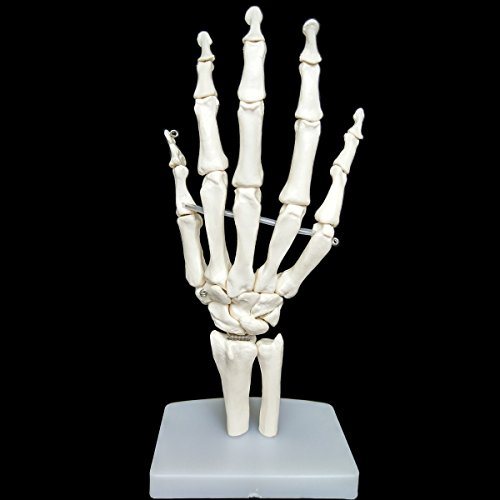 Human Hand Skeleton,Hand Skeleton Model,Life SizeAnatomical Hand Model -