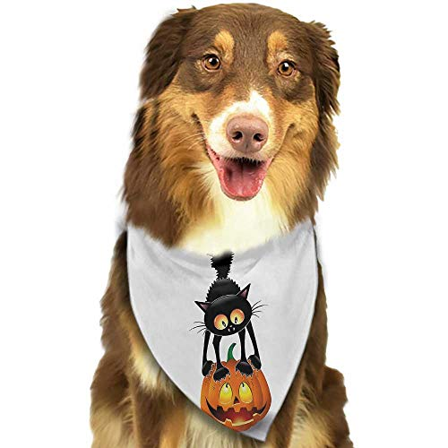 Dog Bandana Halloween Black Cat on Pumpkin Drawing Spooky Cartoon Characters Halloween Humor Art W27.5 xL12 Scarf for Small and Medium Dogs and Cats -