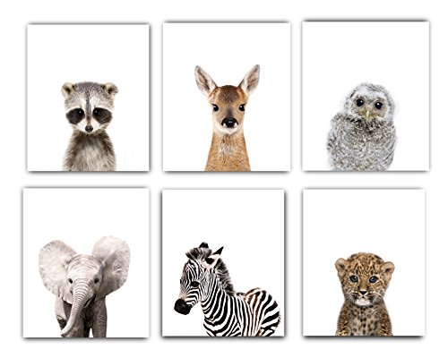 Designs by Maria Inc Nursery Decor Pictures 8x10 | Set of 6 Unframed Cute Baby Animal Photography Wall Prints for Boys amp Girls Room