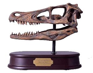 Velociraptor Skull, Dinosaur Polystone Statue, Scale 1/1 by -