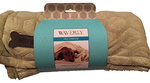 Waverly Sage - 6