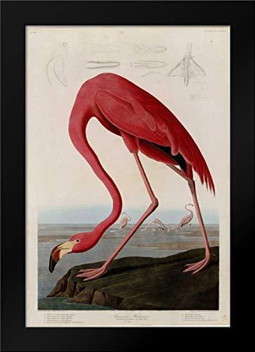American Flamingo 18x24 Framed Art Print by Audubon, John ()