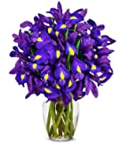 Flowers - Stunning Blue Iris - 15 Stems