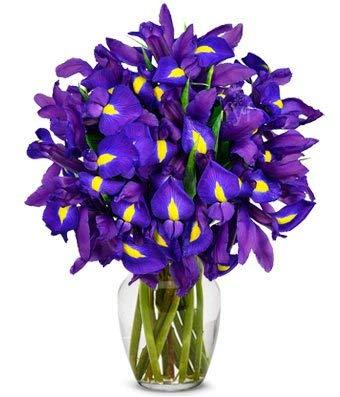 Flowers - Stunning Blue Iris - 15 Stems (Free Vase Included)