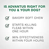 Bayer Animal Health Advantus (imidacloprid) Oral