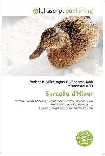 Sarcelle D'hiver